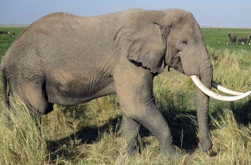Elefant tötet Wilderer im Krüger-Nationalpark