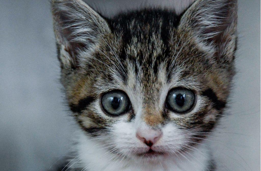 Die beliebtesten Tiere sind weiterhin Katzen. Foto: dpa