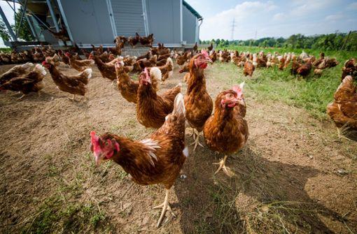 Jedes vierte Ei im Südwesten kommt aus Freilandhaltung