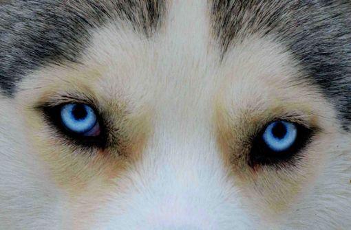 Der lange Weg vom Wolf zum Hund
