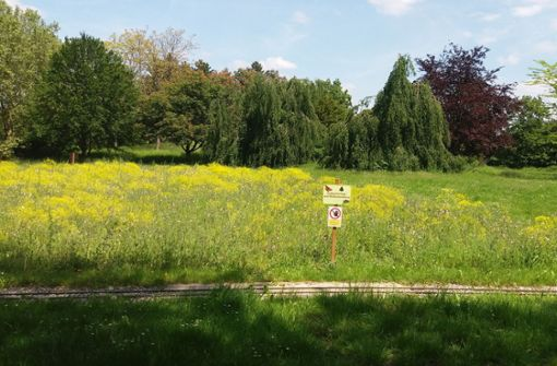 Neue Blühflächen im Rems-Murr-Kreis