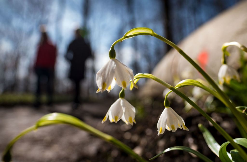 Der  Schwarzwaldverein lädt zum Wandern ein. Foto: dpa