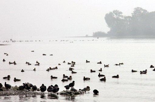 Vogelgrippe am Bodensee festgestellt