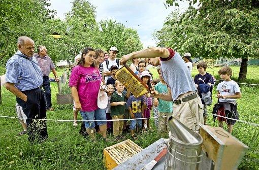 Imker in der Stadt produzieren gesunden Honig