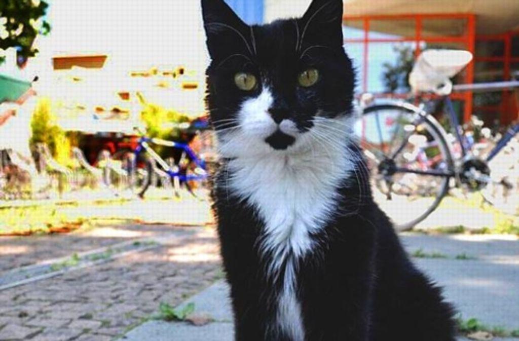 Schwarz-weißes Fell, Foto: Ramona Löffler
