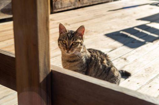 Kletteraktion an Rolltor bringt Katze in die Bredouille