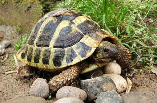 Wenn die Schildkröte im Tierheim landet
