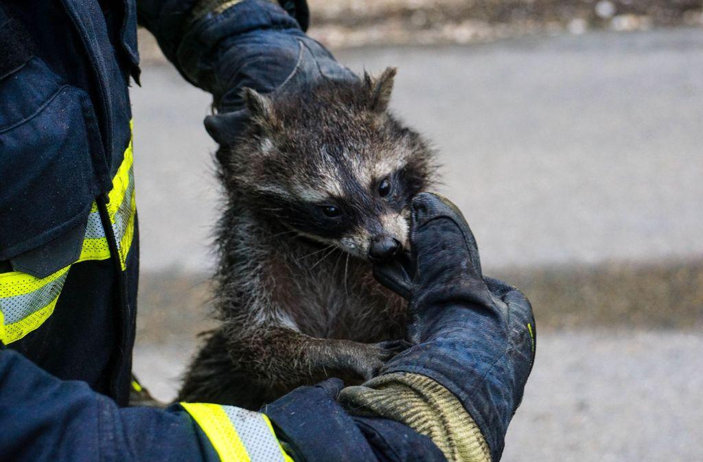 Für seine Rettung bekommt die Feuerwehr Göppingen nun Urkunde von PETA. Foto: SDMG