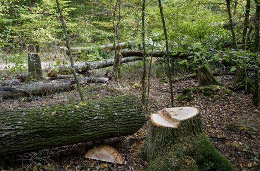 Erneut  Bäume,  Hochsitz  und Wagen zerstört