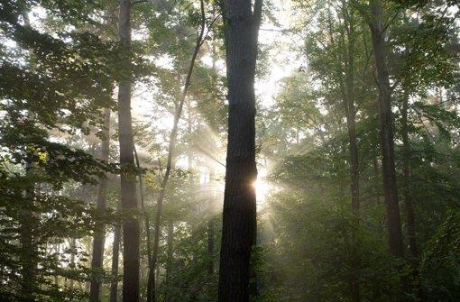 Forst-Lobbyisten kämpfen für die Natur