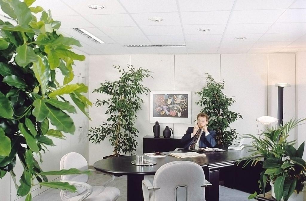 Pflegeleicht soll die Büropflanze sein und  hart im Nehmen. Foto: dpa