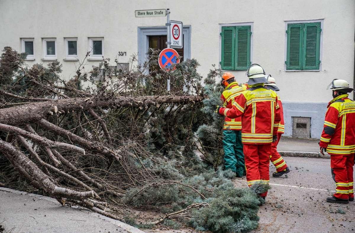 In Köngen entwurzelte der Sturm einen Baum,  dadurch kam es zu Behinderungen in der Kirchheimer Strasse. Foto: SDMG// Kohls