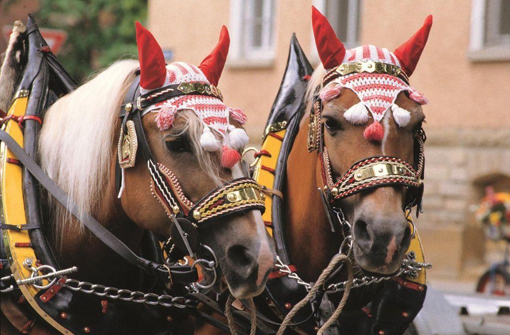 Beim Umzug am Sonntag gibt es noch viel mehr Rösser zu sehen. Foto: Tourismus & Events Ludwigsburg