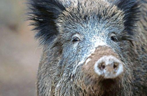 Wo sind die Schweine hin?