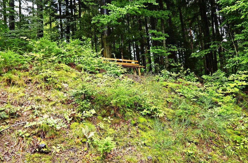 Bank im Grünen: Der Himmelssteig bietet dem Wanderer lauschige Ruheplätze. Foto: Graubner