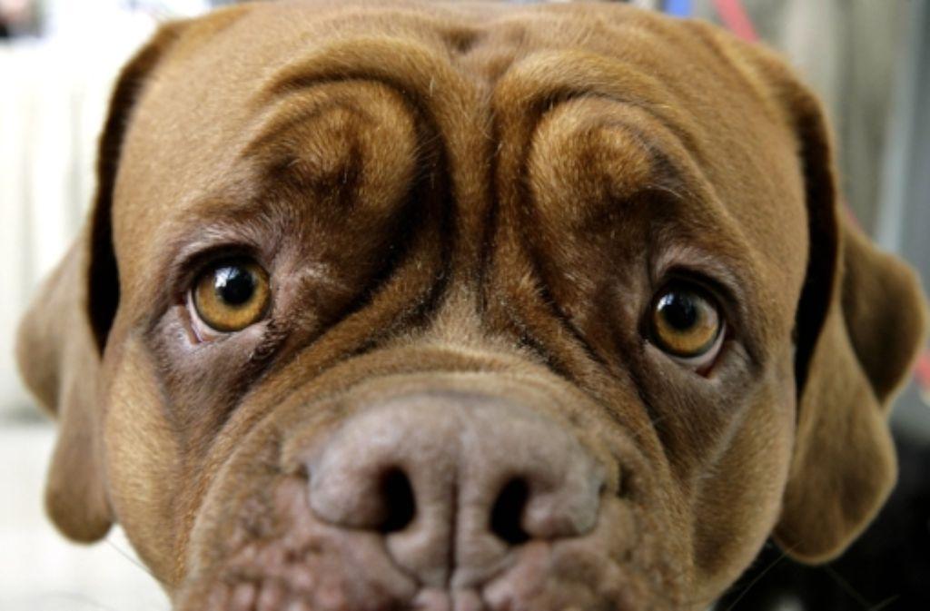 Das Tierheim ist auf den Hund gekommen. Foto: dpa
