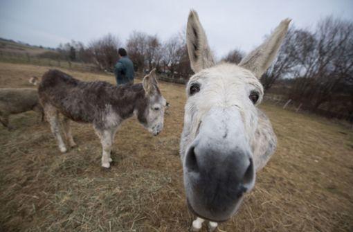 Spanischer Verein bietet Klimaaktivistin Esel zur Weiterreise an