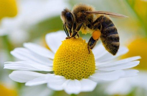 Honig und Tees aus dem Land unbedenklich