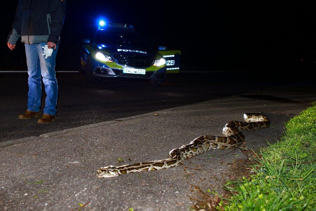 Ein Python liegt an der B29 bei Lorch.  Foto: www.7aktuell.de | Andreas Friedrichs