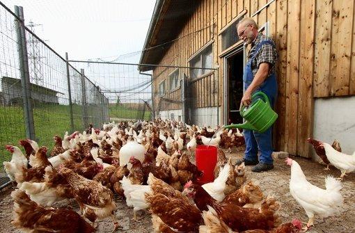 Tierische Abkühlung auf dem Bauernhof