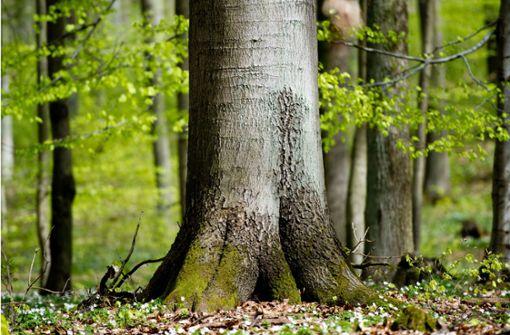 """""""Jeder Baum ist  wichtig, das Kollektiv ist aber wichtiger"""""""