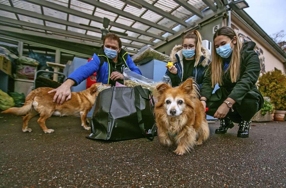 Die Hunde Tina und Trudi freuen sich mit Helin Cengiz, Naomi Font Pera (Mitte) und  Horst Theilinger über die Spende des Jugendgemeinderats. Foto: Roberto Bulgrin