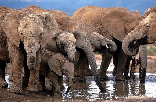 US-Regierung erlaubt wieder Import von Elefantentrophäen