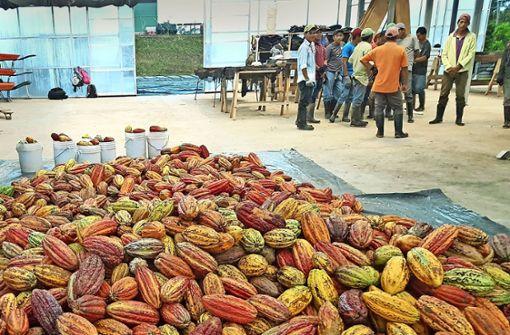 Kakaoanbau in Zeiten des Aufstands