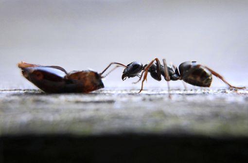 Was können wir von Ameisen lernen?