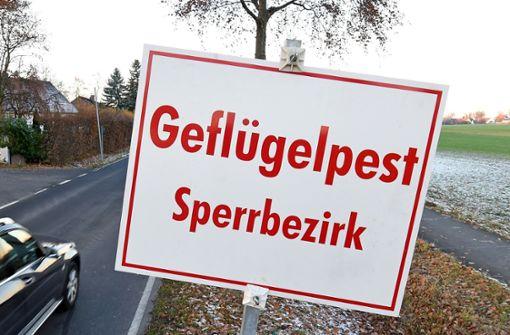 Geflügelpest im Hohenlohekreis nachgewiesen