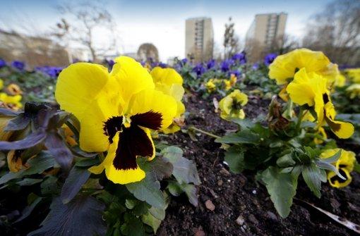 Der Stadtgarten soll schöner werden