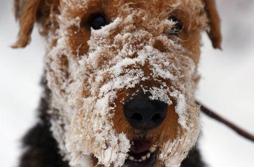 Ohrfeige wegen eines Hundes
