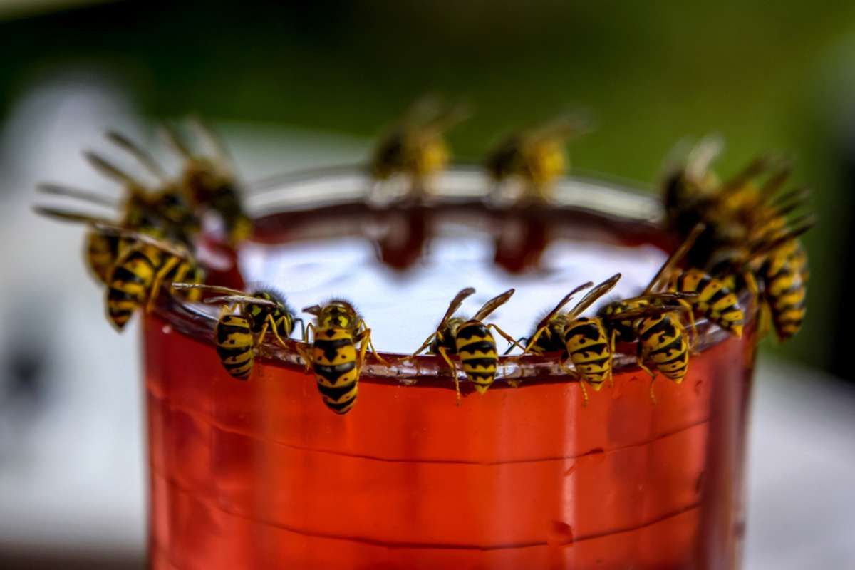 Was tun mit den Wespen? Foto: fotorobs / shutterstock.com