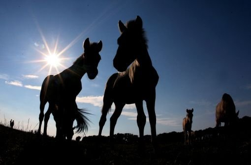 10. März: Pferd springt auf Streifenwagen