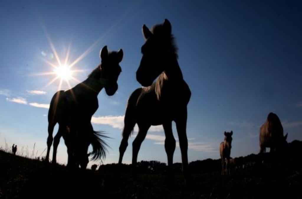 Ein Pferdefleisch-Skandal erschüttert mittlerweile auch Deutschland: Auch im Südwesten ist verdächtige Ware aufgetaucht. Foto: dpa