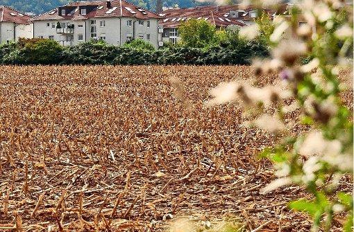 Die günstige Wohnung soll keine Utopie mehr sein