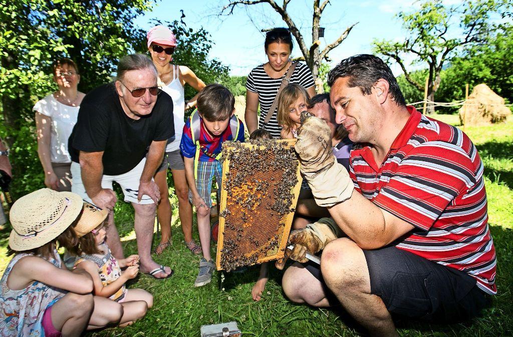 Der Imker Matthias Maisch  erklärt den Besuchern wie der Honig ins Glas kommt. Foto: Ines Rudel