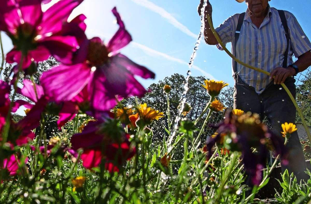 Sie ist nicht mehr allzu fern: die schöne Gartenzeit. Foto: dpa/Sebastian Gollnow