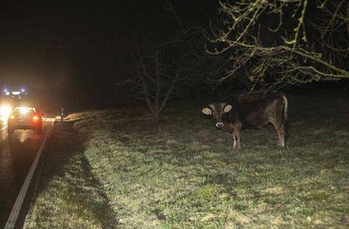 Polizei erschießt Kuh nach Unfall mit Auto