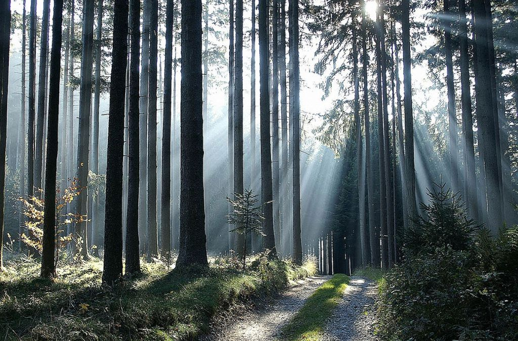 Der Bürgerinitiative liegt die Zukunft des Waldes sehr wichtig. Foto: www.BilderBox.com