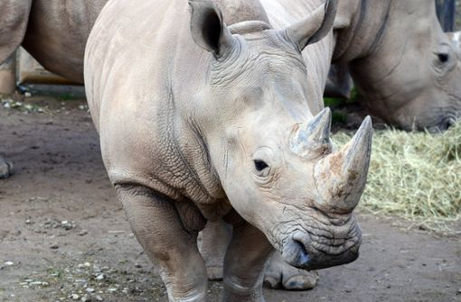 Zweijährige fällt in Nashorn-Gehege
