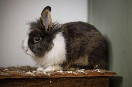 Abgabewelle rollt auf Tierheime zu