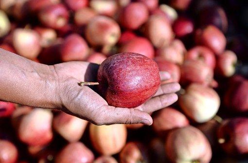 Apfelernte, wie sie früher war
