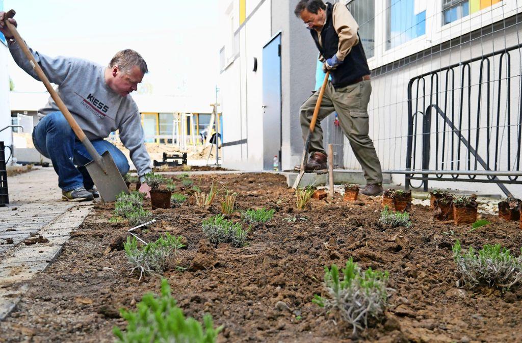 Neben Bäumen und Büschen pflanzten die Helfer auch kleinere Gewächse. Foto: Eileen Breuer