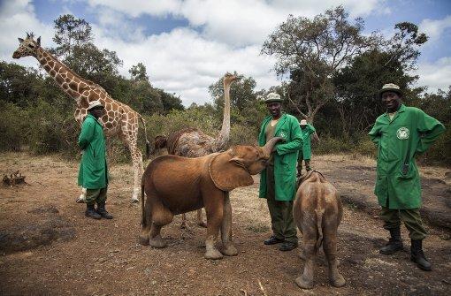 Länder ringen um Elefantenschutz