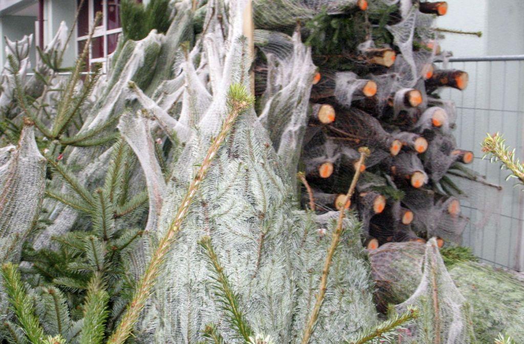 Im Stuttgarter-Westen haben unbekannte Täter Christbäume mitgehen lassen. Foto: STZN