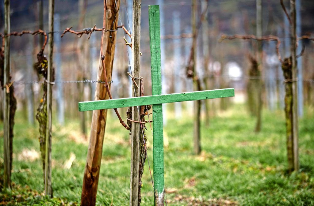 Viele Bauern haben aus Protest gegen das Agrarpaket grüne Kreuze aufgestellt. Foto: Gottfried Stoppel