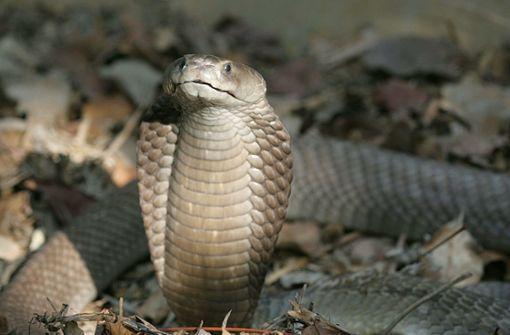 Zoll stellt fast 90 Reptilien in Koffer sicher