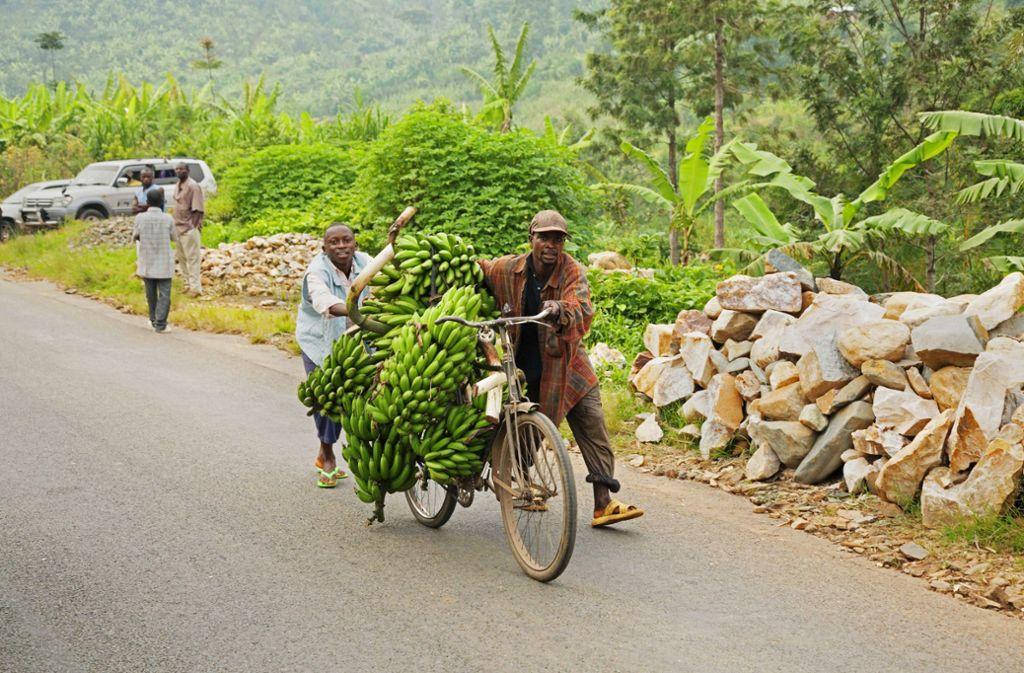 Bauern transportieren  in Burundi Kochbananen mit einem Fahrrad auf den Markt Foto: Imago