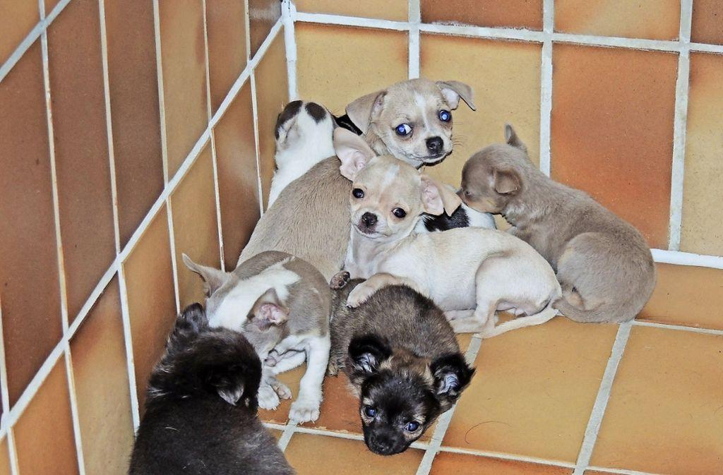 Diese Hundewelpen wurden aus einem Transporter gerettet. Foto: Polizei